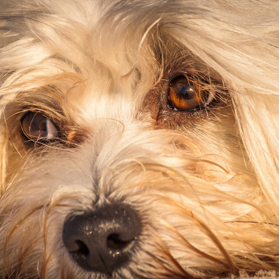 Tierkommunikation Blogartikel