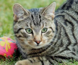 Katze mit Bällchen