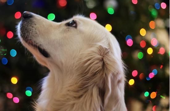 Hundekopf vor Hintergrund mit bunten Lichtreflexen