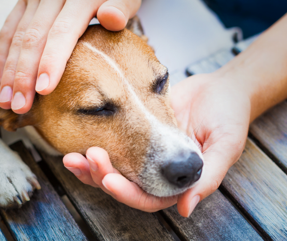 Hundekopf wird in den Händen gehalten