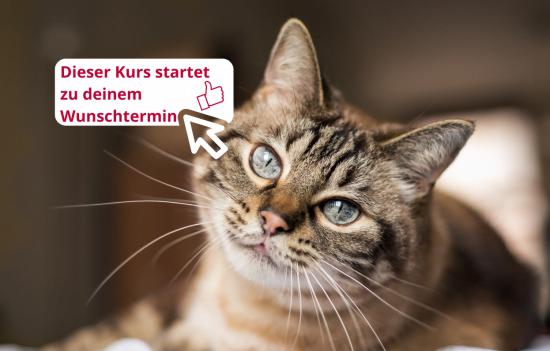 Online-Coaching Katzen