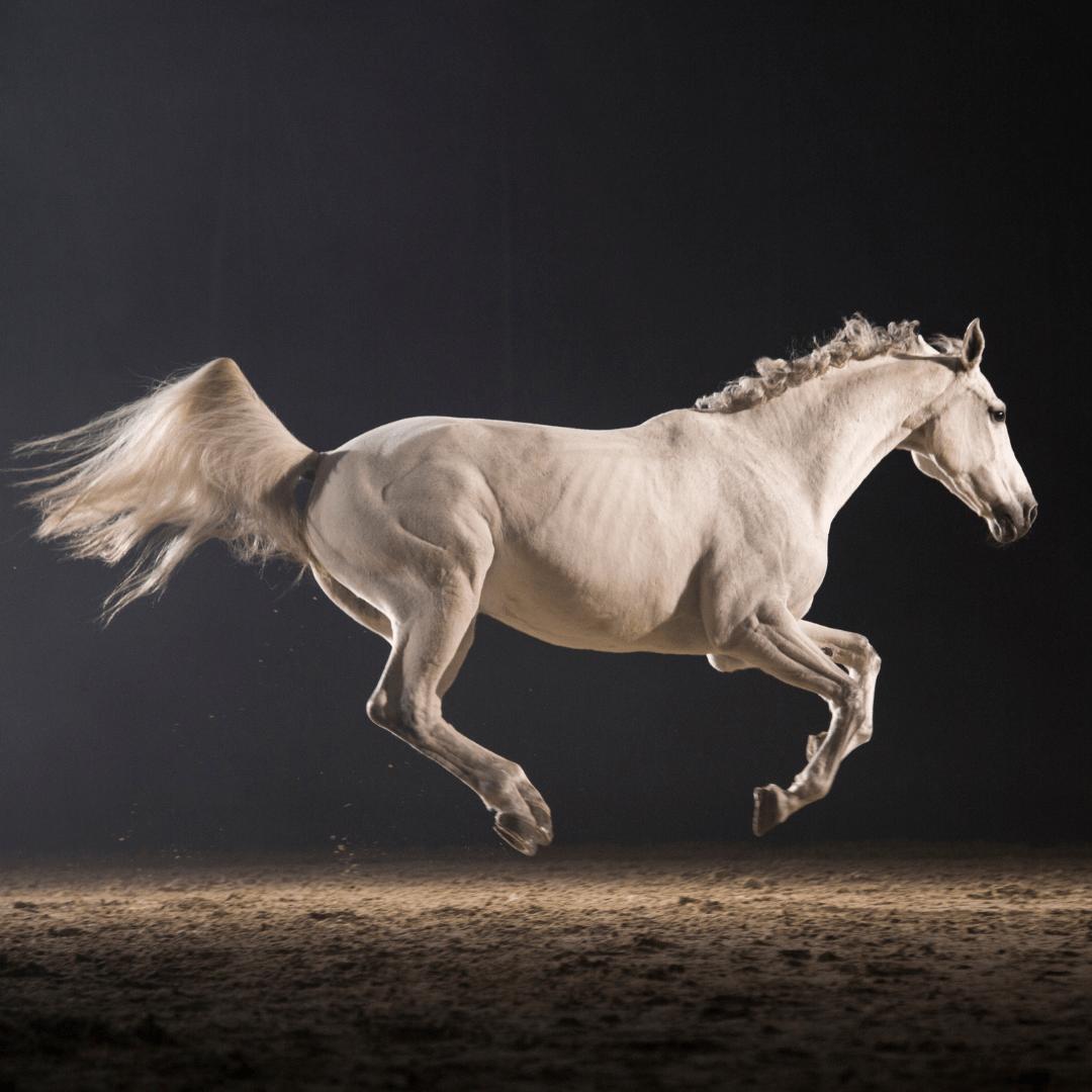 Verhaltensprobleme bei Pferden